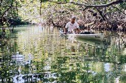 Man kayaking through the mangroves