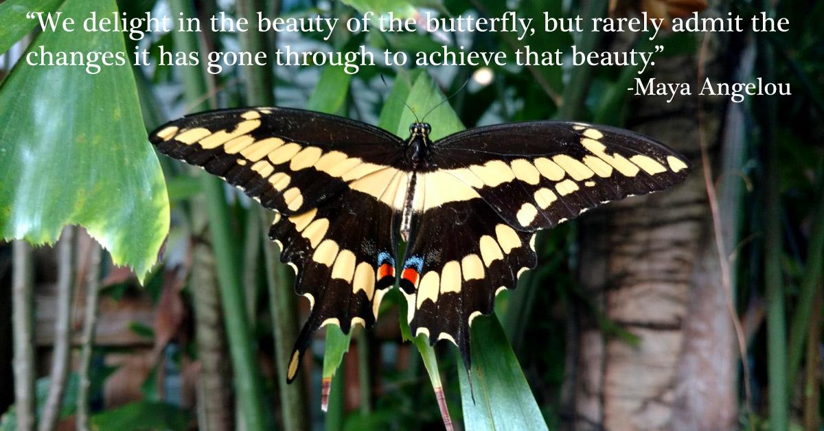 Butterfly on palm leaves in Key West garden