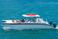 Dolphin cat boat underway