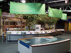 Mangrove exhibits at the Eco Discovery Center