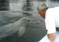 Passenger viewing wild dolphin on waters near Key West