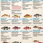 Fish identification chart from Florida Fish and Wildlife