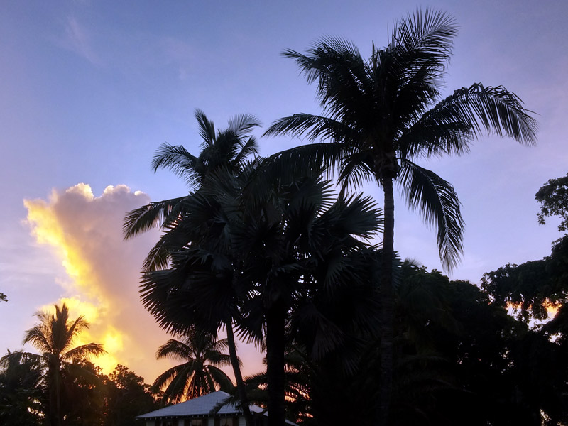 Coconut palm trees are seen in graphic silhouette above a historic roof and against the setting sun in Old Town.