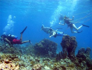 With breathing respirators attached to floating air tanks, snorkelers enjoy the reef