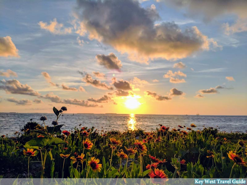 Indian Blanket wildflowers at the beach while the sun sets over Key West