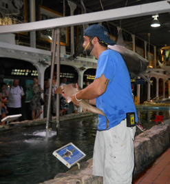 Key West Aquarium guide showing a live nurse shark to visitors.